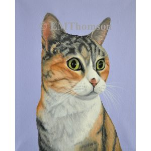 Calico Tabby Cat