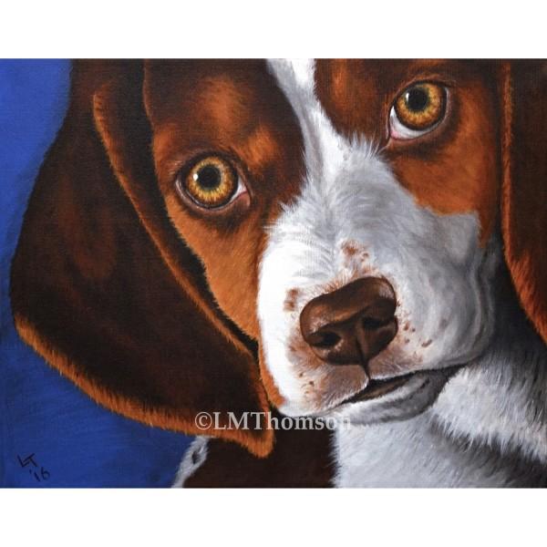 beagle-eyes-sm1