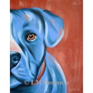 Blue Pittie